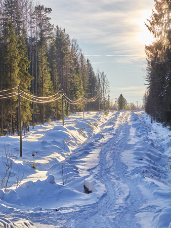 Road in the forest. Winter