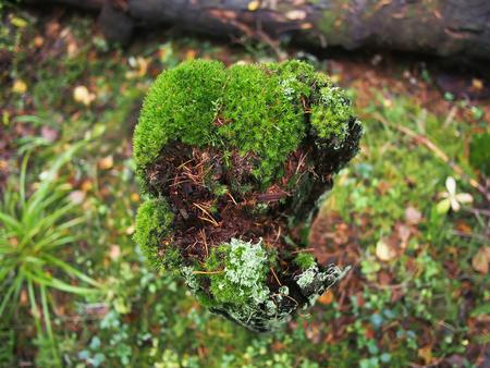 moss on a stump Stock Photo