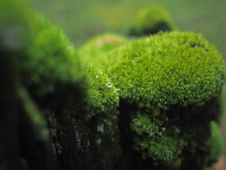 moss on a stump Фото со стока