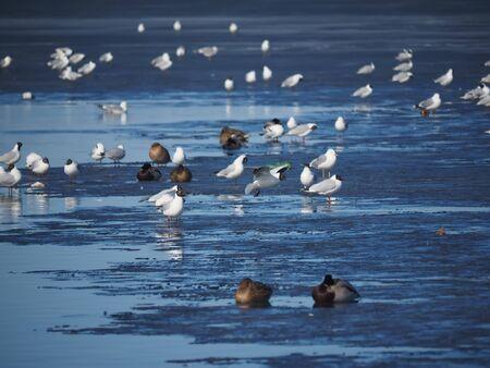 seagull in flight. Spring