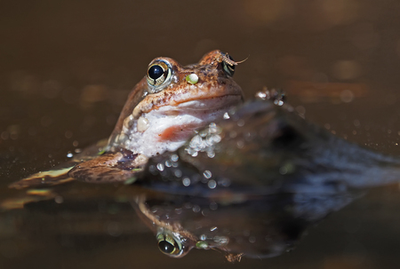a frog in the pond. Spring