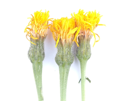 scared flowers on white background