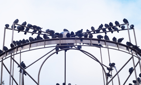 pigeons on a metal structure