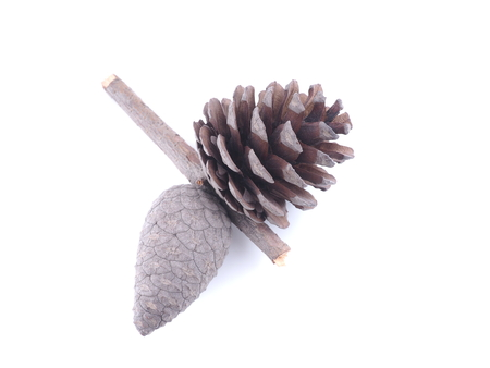 two fused cones on a white background