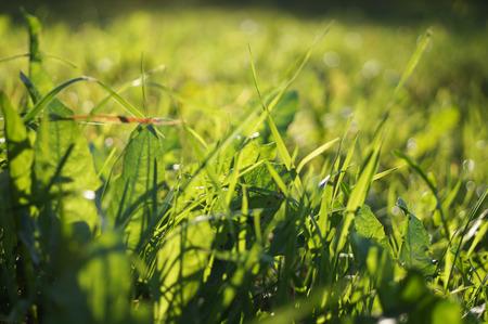 dandelion in the forest Stockfoto