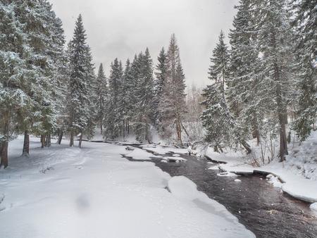 coniferous forest in the snow Standard-Bild - 112766243