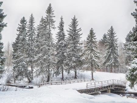 coniferous forest in the snow Standard-Bild - 112766277