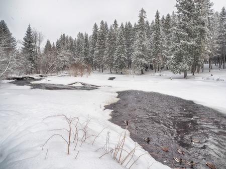 coniferous forest in the snow Standard-Bild - 112766280