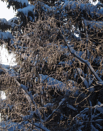 tree branches in the snow. winter Banco de Imagens - 117094673