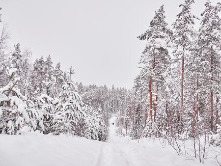 winter in the taiga