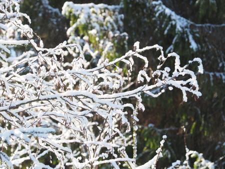 twigs in the snow. winter Banco de Imagens