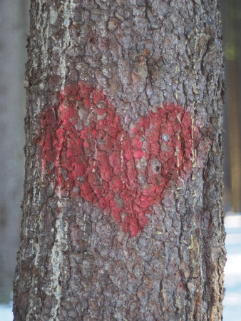 heart of painted on a tree