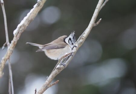 tit bird in the forest. winter 免版税图像