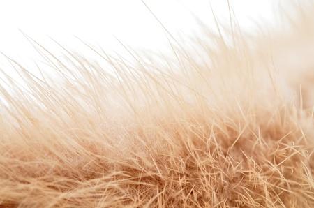 Fur on white background photo