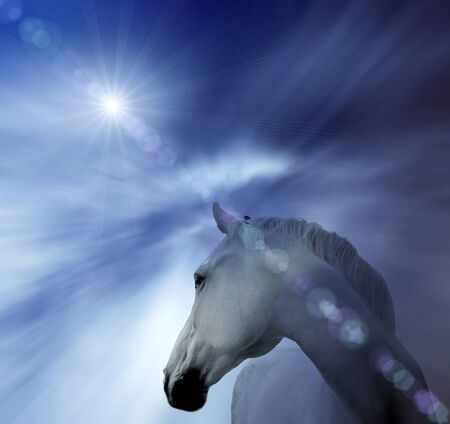 White horse, abstract background