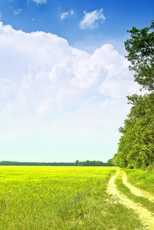 Green field with road and blue sky Stock Photo - 10034202
