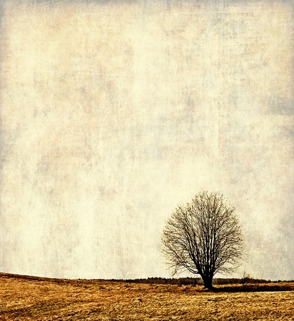 Vintage landscape, alone tree photo