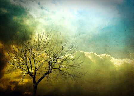 Abstract tree, background Stock Photo - 10034194