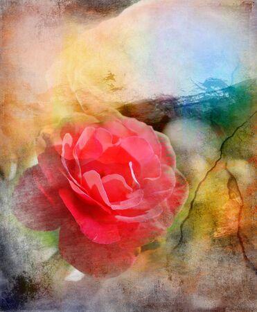 Red rose, grunge color background photo
