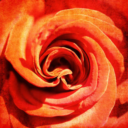 Red rose, vintage background Stock Photo - 11016224