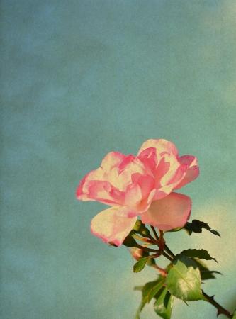 vintage floral: Rose, vintage background Stock Photo