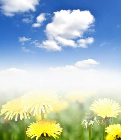 Blue sky and yellow dandelions Stock Photo - 13596233