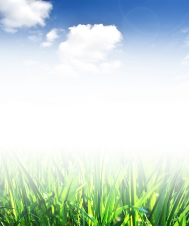 Green grass and blue sky Stock Photo - 13596230