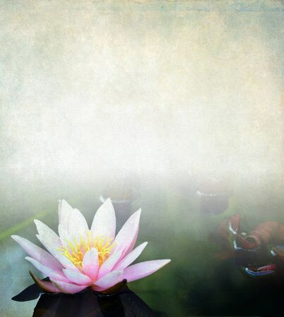Pink water lily, vintage background photo