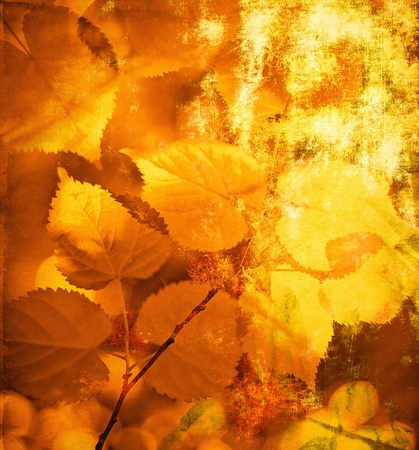 Vintage autumn leaves photo