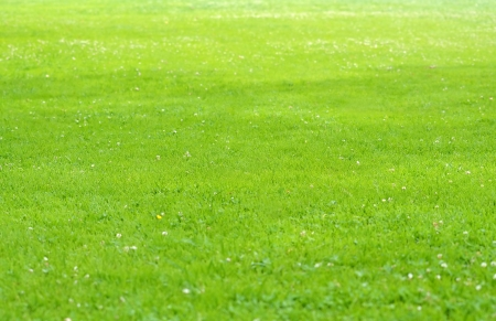 Green grass field photo