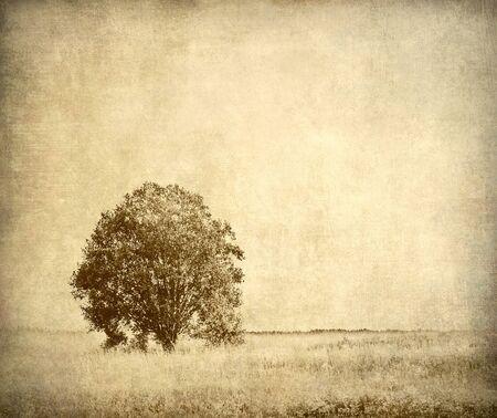 Tree, vintage landscape photo