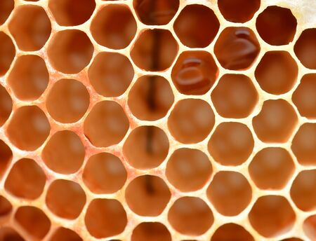Honeycomb close up photo