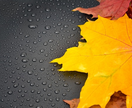 Autumn background, maple leaves and water drops photo
