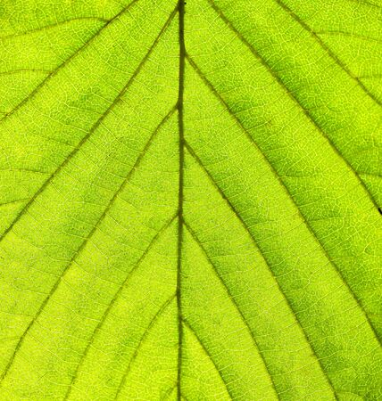 leaf texture: Green leaf texture
