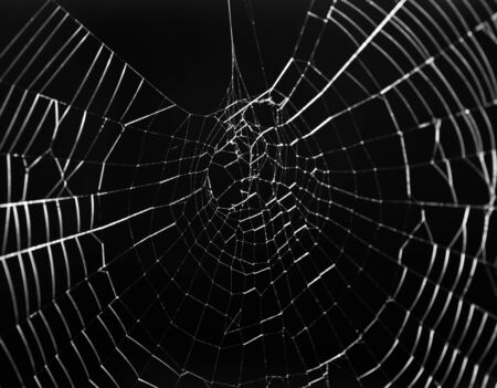 spider web: Spider web Stock Photo