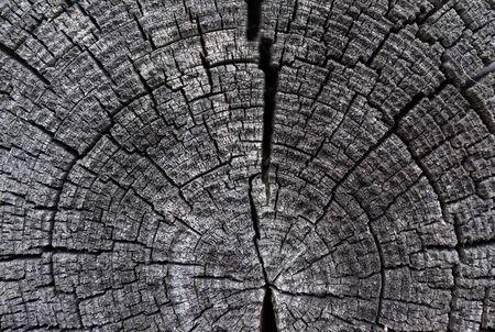 old texture: Cracked wood tree texture Stock Photo