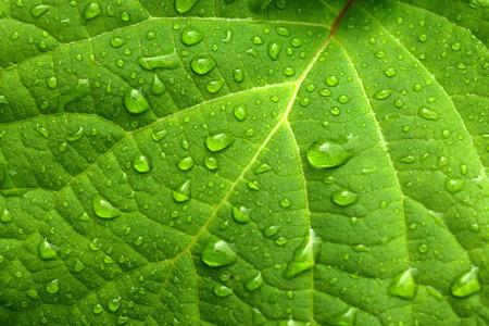 Zelený list a vodní kapky Reklamní fotografie