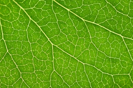 녹색 잎 텍스처 스톡 콘텐츠