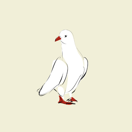 red beak: white dove with red beak and red feet Illustration