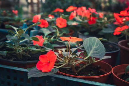 a bunch of flowers and plants in the greenhouse. green plants in the room light nature. 版權商用圖片