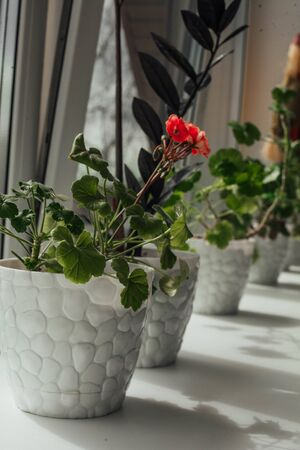 a row of flowers on the windowsill.