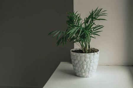 a green houseplant stands on a white windowsill