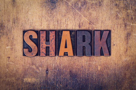 sand shark: The word Shark written in dirty vintage letterpress type on a aged wooden background.