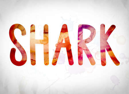 pez martillo: The word Shark written in watercolor washes over a white paper background concept and theme. Foto de archivo