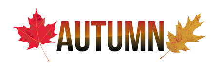 The word AUTUMN and colorful fall leaves on a white background. Vector EPS 10 available.