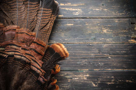 An eastern wild turkey tail feathers  on a wooden background.