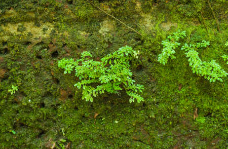 Green mossy wall background from the jungle photo