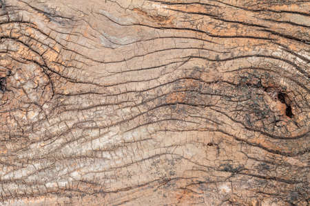 duckboards: Old wood texture being eroded. for background