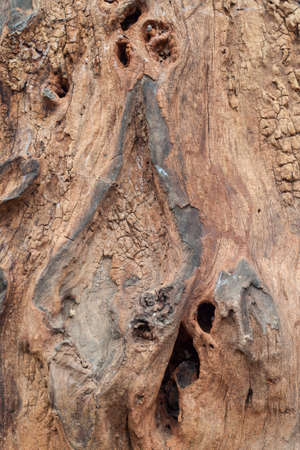 Old wood texture being eroded. for background