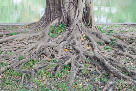 extent: The many roots of the banyan forest.